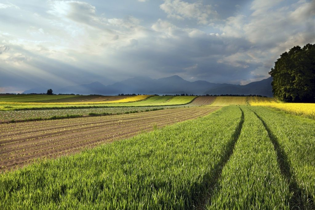 LithoSoil als Bodenhilfsstoff, Zusatz im Kompost & Geruchsbinder in der Gülle